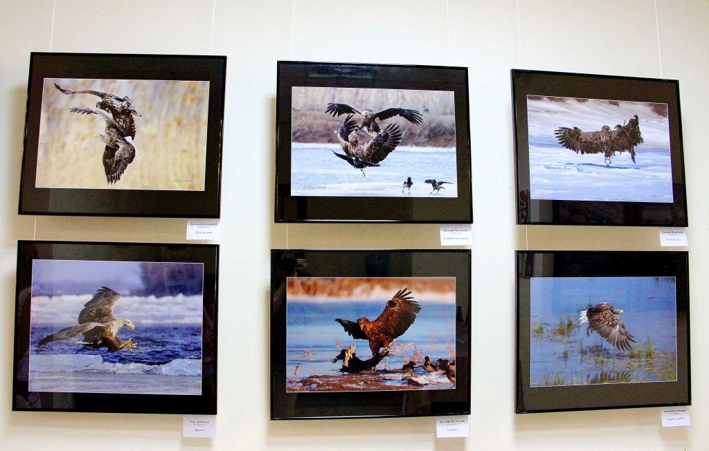 В Астрахани открылась фотовыставка, посвященная орланам